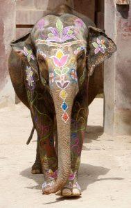 23/0/2013 BANIDORM (ALICANTE).- Celebracion del 4 cumpleaños de la elefanta Petita en Terra natura con una fiesta Holy / FOTO: ALEX DOMINGUEZ