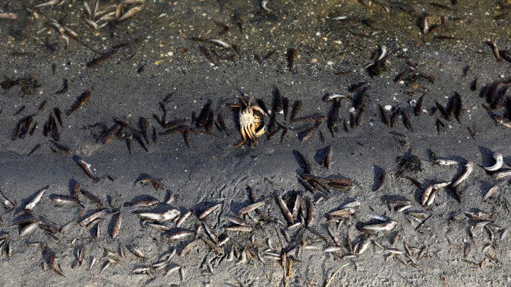 Mar Menor Fish